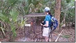 Looking at hog trap