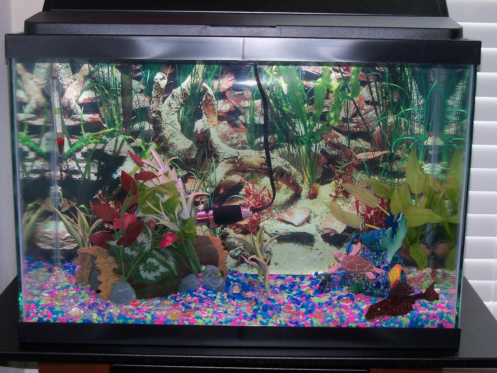 Fish - 100_6530.JPG