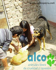 Campaña de asistencia en Mangomarca SJL (23)