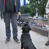 KNON-honden in Emmen - DSC_0775.JPG