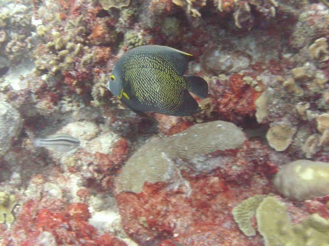 Bonaire 2011 - PICT0043.JPG