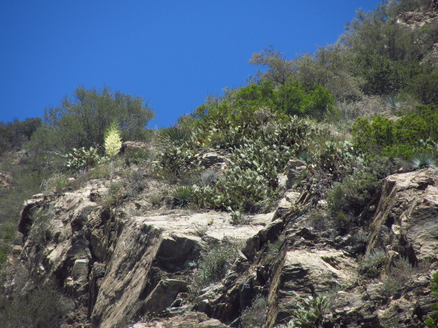 cactuses up on the top of the cliffs