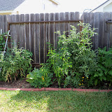 Gardening 2011 - 100_9937.JPG