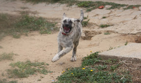 Mystique - Rehomed Loule Portugal