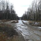 Вырубки ЛЭП в Воронежской Нагорной Дубраве 070.jpg