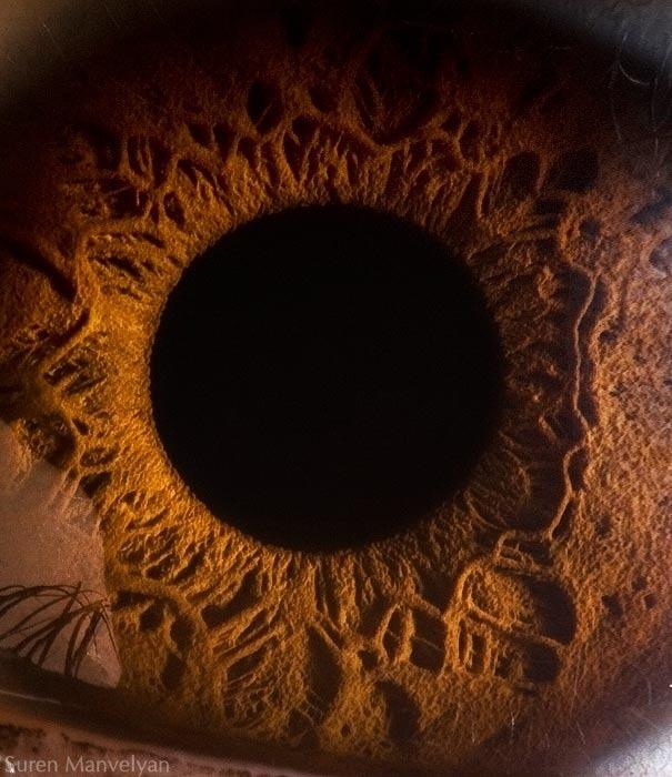 human eyes 1 (4)