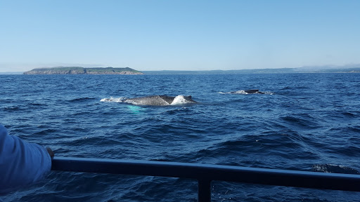 Whale watching with O'Brien's in Newfoundland