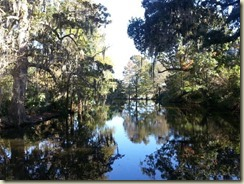 20151030_ Magnolia Plantation garden walk 3 (Small)