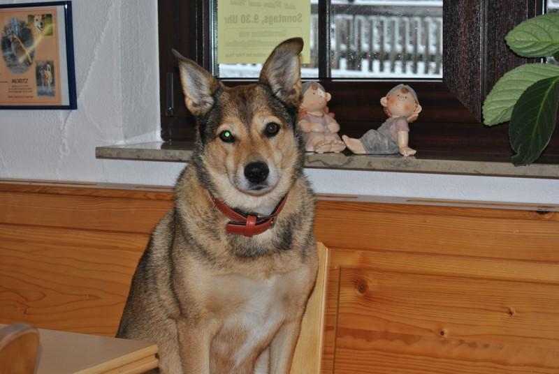 20121026 Vortrag Happy Dog - DSC_0049.JPG