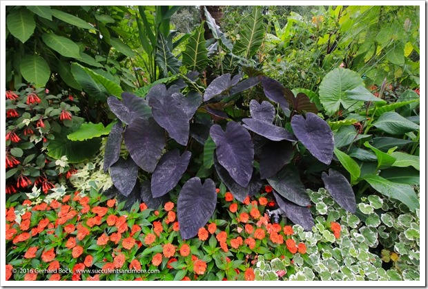 160906_Butchart_Gardens_0182