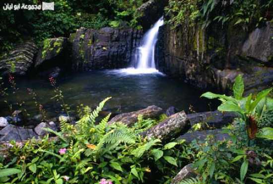 عجائب الدنيا السبع الطبيعية El-yunque-4-1