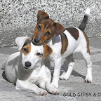 Gipsy i Chanell.jpg