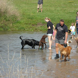 Hondenzwemstrand