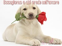 buongiorno buon giorno immagine con frase aforismo a chi crede nell'amore cane rosa rossa.jpg