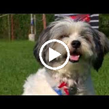HundeschuleInuVideo