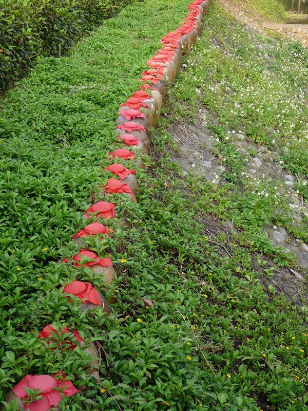 TAIWAN.Dans la région de MIAOLI - P1090477.JPG