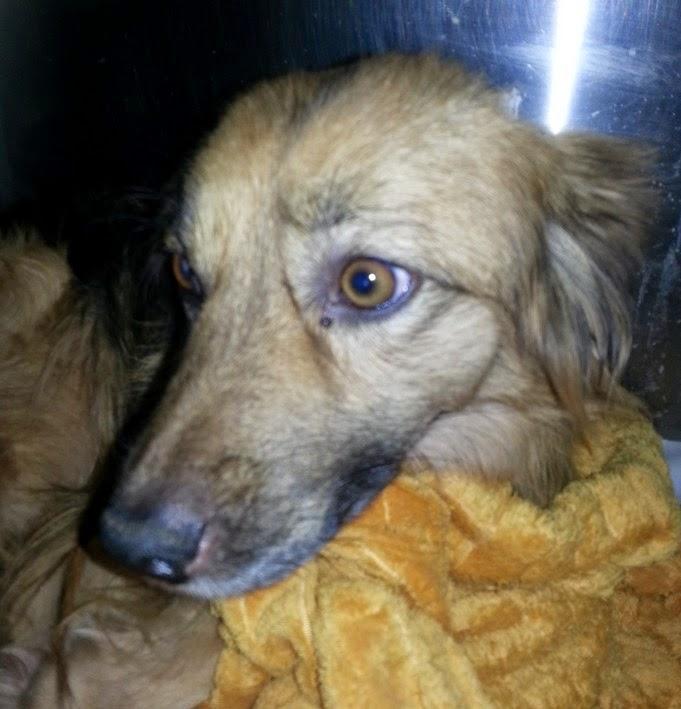 Latina adotta un cucciolo - Portare il cane al canile ...