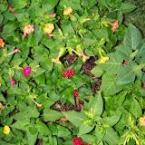 Gardening 2014 - 116_1974.JPG