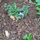 Gardening 2014 - 116_1268.JPG