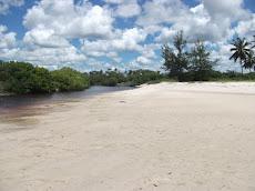 Rural mangroves