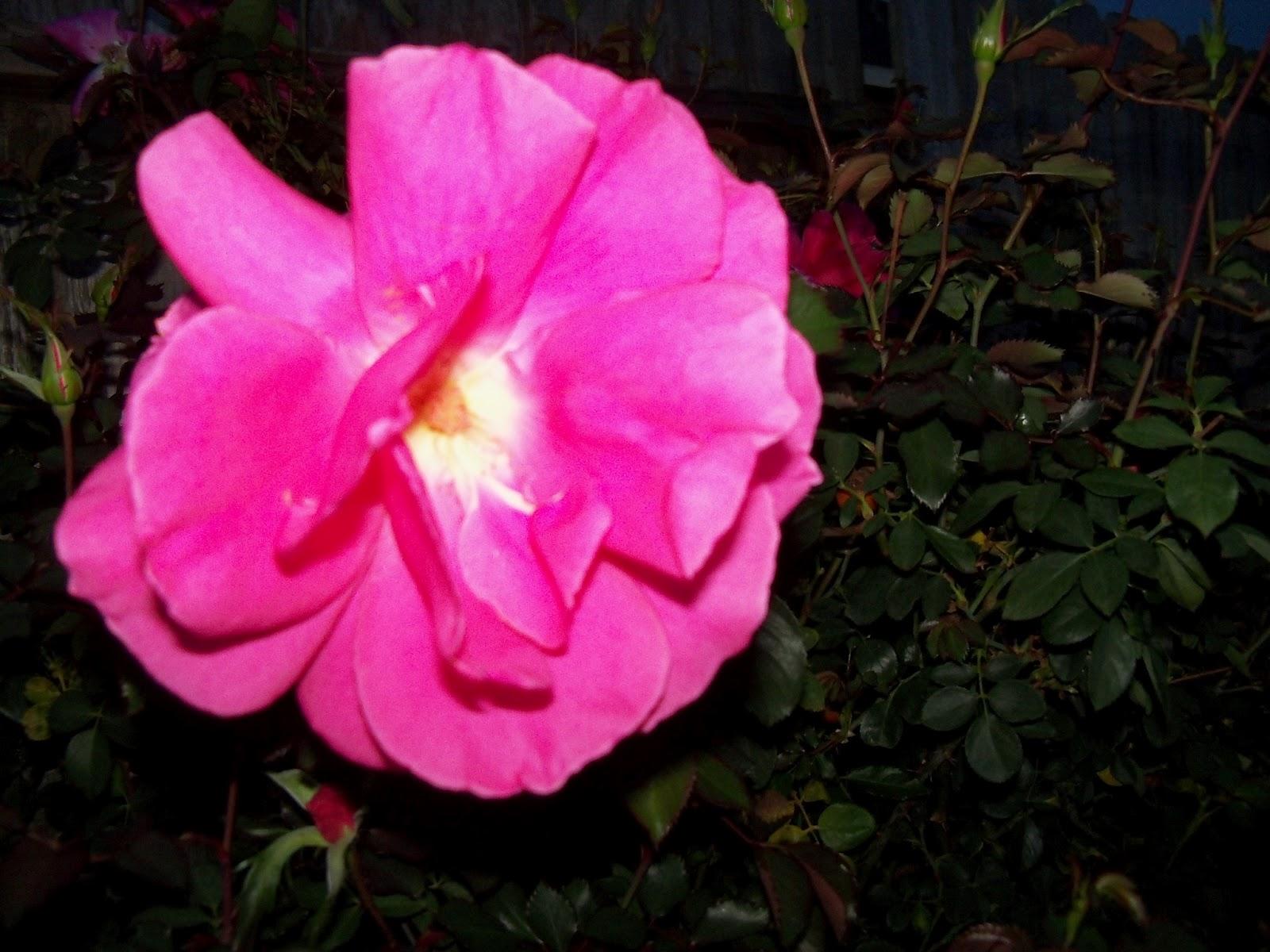 Gardening 2012 - 115_1210.JPG
