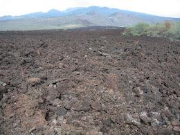 Lave fields at the Ahihi Keanau Reserve.