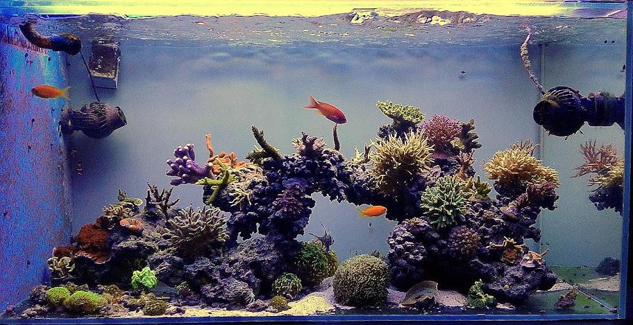 432l - Morskie Mateusza89 IMG-20151025-WA0001