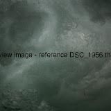 DSC_1956.thumb.jpg