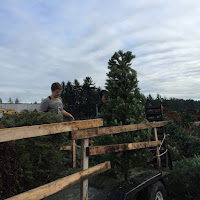 Christmas Tree Pickup - January 2016 - IMG_5732.JPG
