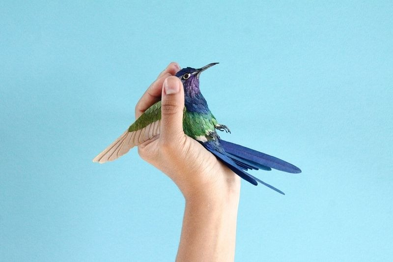 diana-beltran-herrera-birds-5