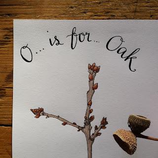 Oak :: www.AliceDrawsTheLine.co.uk