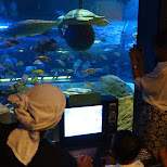 underwater camera control at the Shinagawa Aquarium in Shinagawa, Tokyo, Japan
