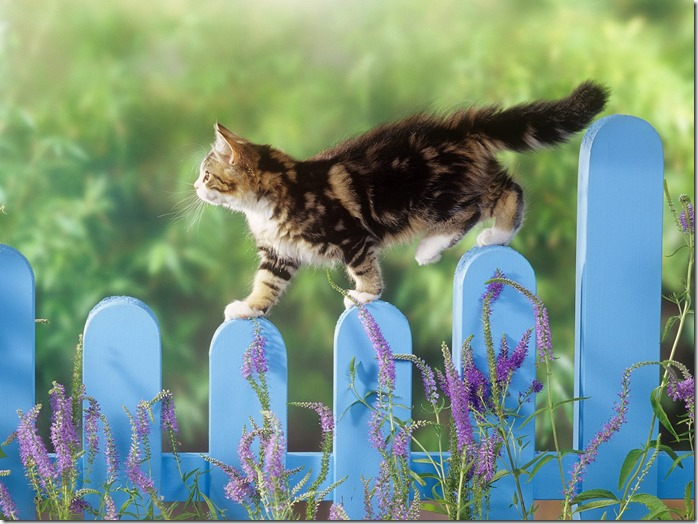 Animals_Cats_The_cat_on__fence_017079_