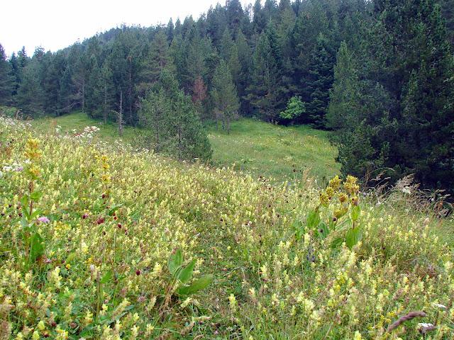Senderismo: Banhs de Tredòs - Tuc de la Salana - Llacs de Colomers