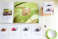 Montessori Inspired Study of Snails for Preschoolers