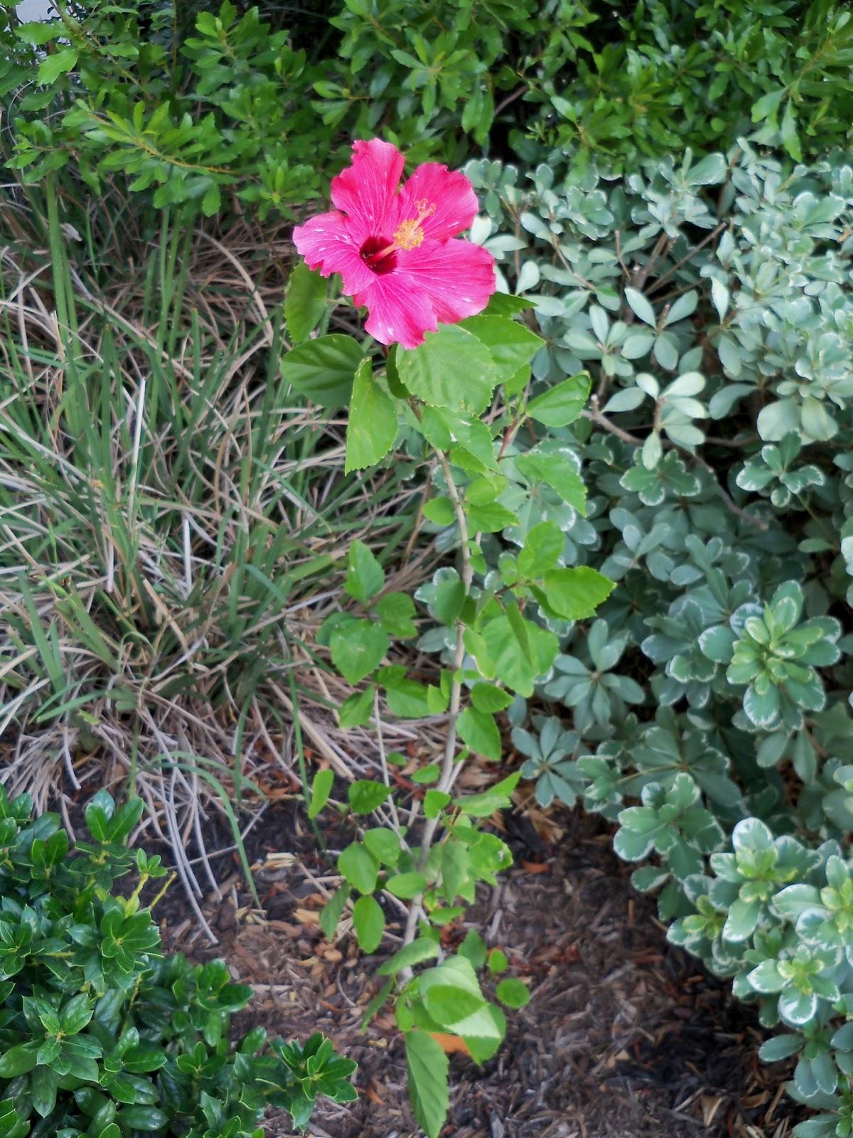 Gardening 2011 - 100_9192.JPG