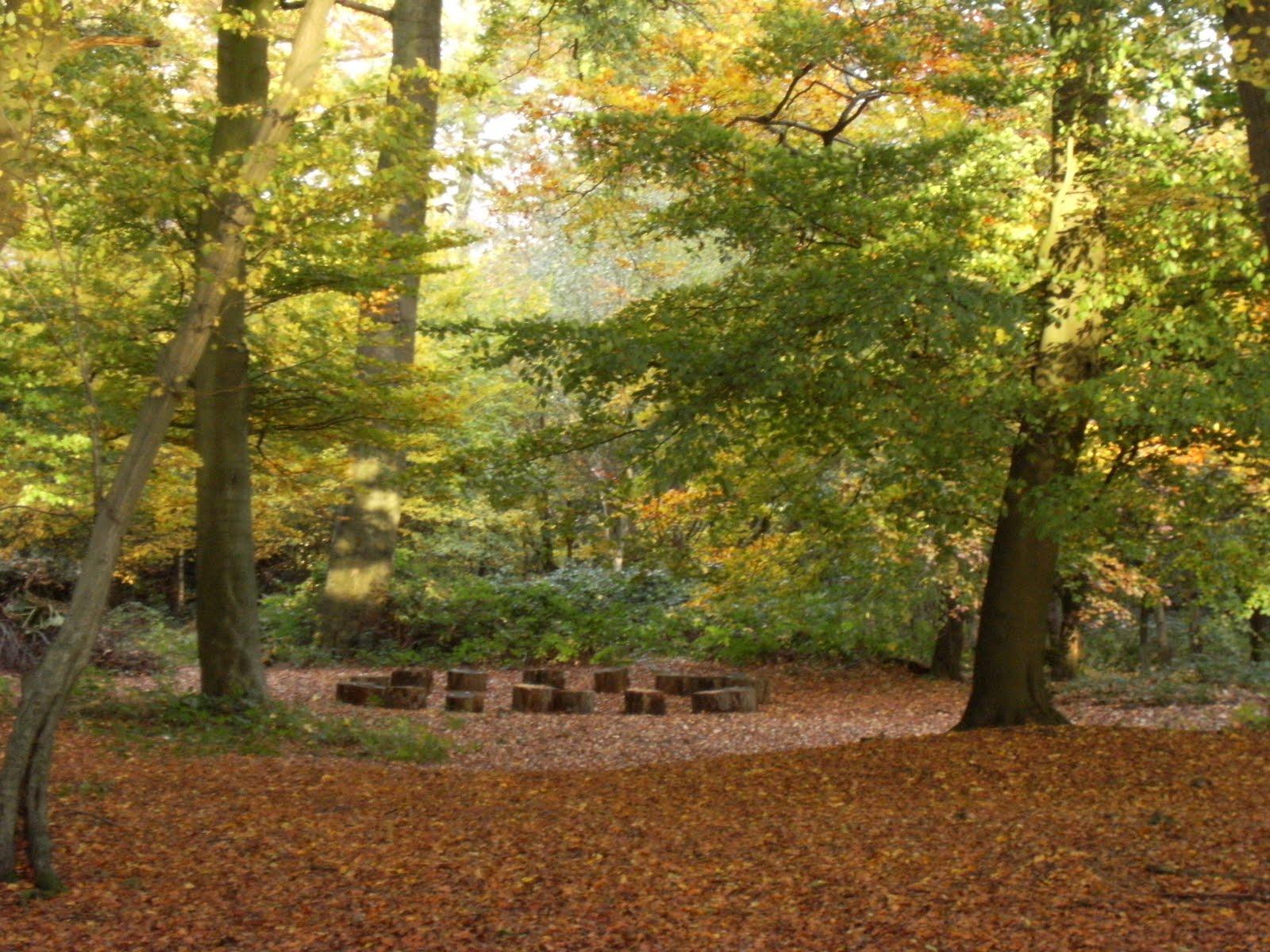 DSCF2160 Beech wood, South Heath