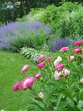 Spring in Rye