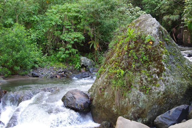 Rio Chontal, 900 m. San Miguel de Chontal (Imbabura, Équateur), 11 décembre 2013. Photo : J.-M. Gayman