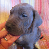 Cressman boy @ 6 weeks