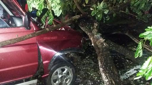 Diduga Ketakutan, Mobil Toyota Kijang, Bonyok Hantam Pohon Tumbang