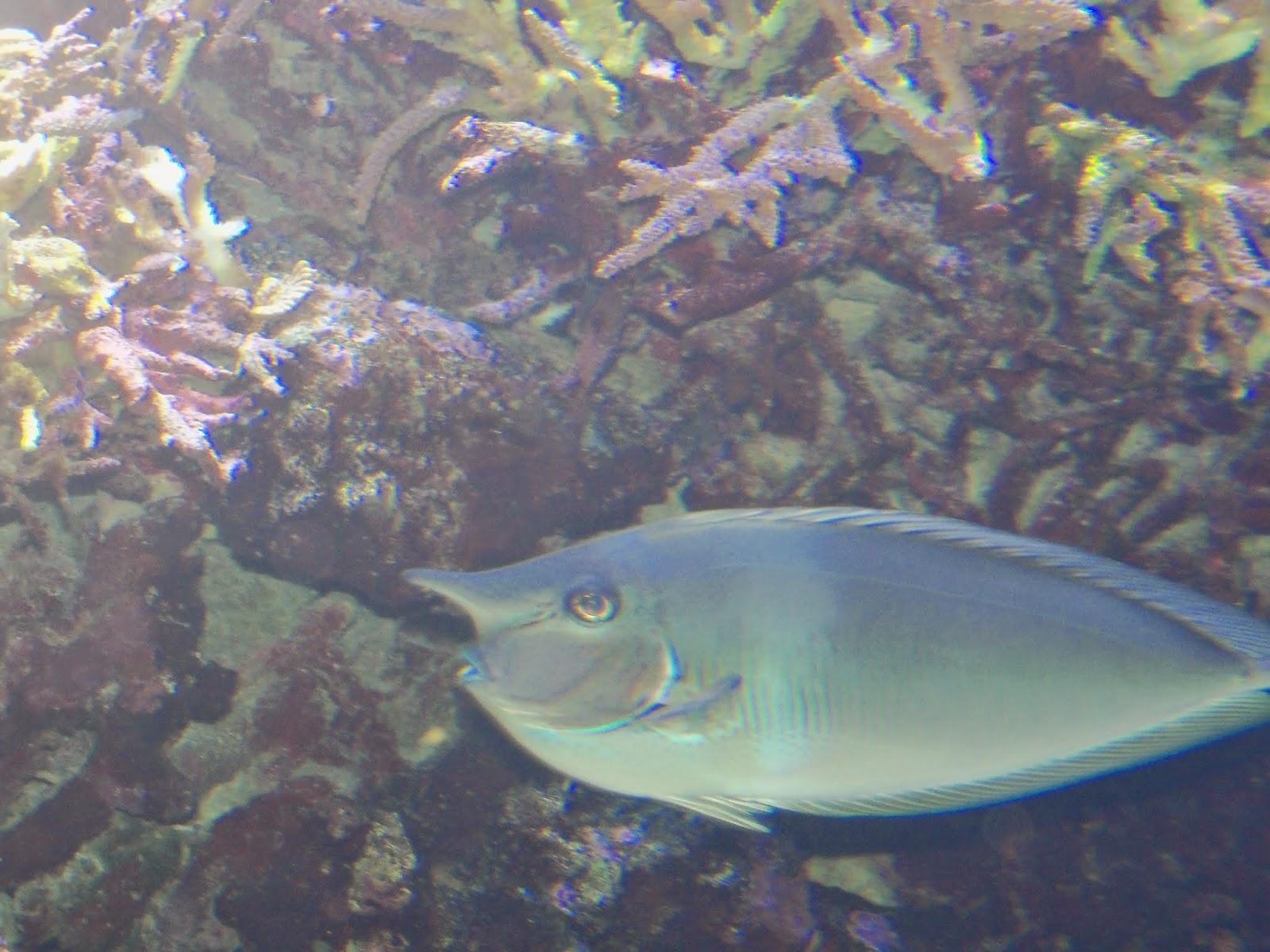Downtown Aquarium - 116_3997.JPG