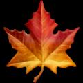 [maple-leaf_1f341%5B17%5D]