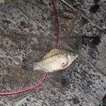 20140805_Fishing_Bochanytsia_012.jpg