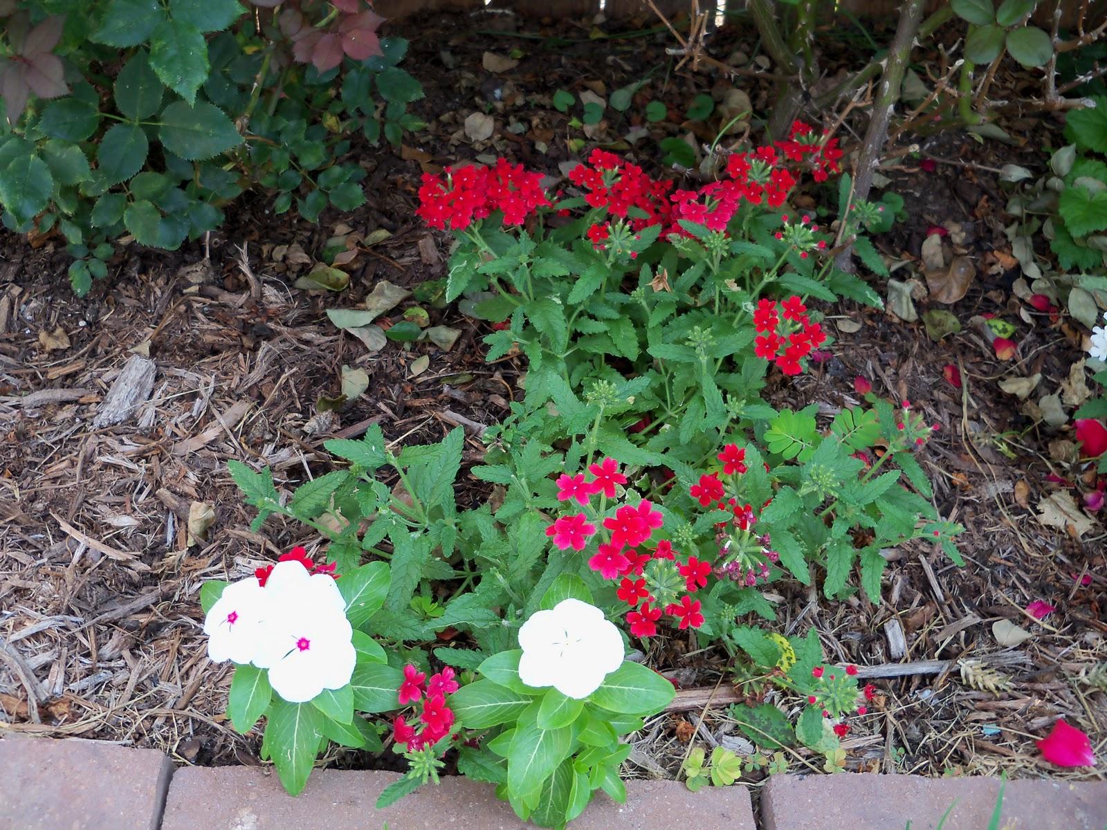 Gardening 2010, Part Two - 101_3091.JPG