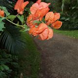 Hawaii Day 5 - 100_7272.JPG