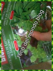 cosa seminare a marzo nell'orto e sul balcone: spinaci, misticanza di lattughini, prezzemolo, rucola