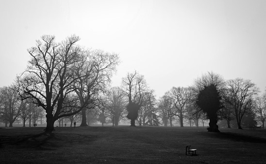 parks-164068_960_720