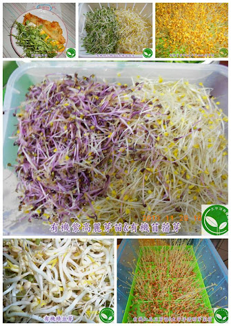 有機芽菜培育箱 有機芽菜
