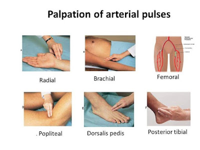 Study Medical Photos: Palpation of Arterial Pulses - Pictures